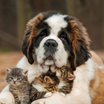 Large dog with cute cats